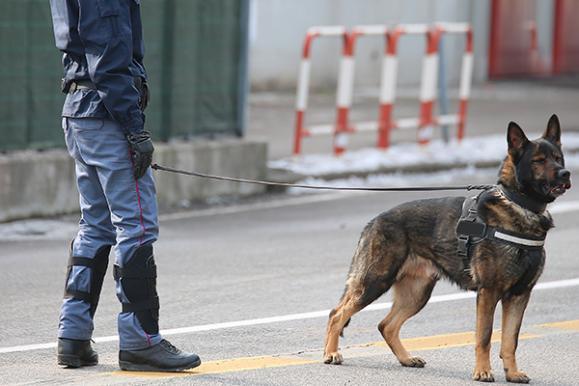 mission maître-chien
